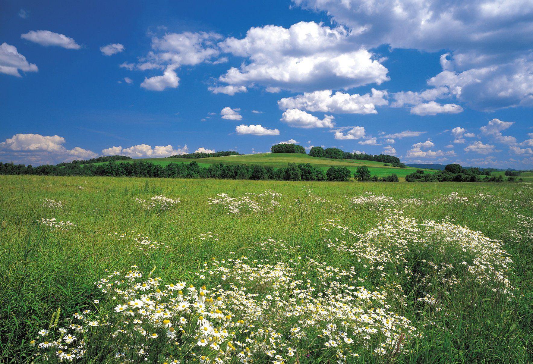 Komar, Fototapete, »Meadow«, 368/254 cm