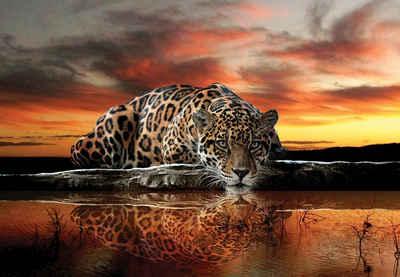 Consalnet Fototapete »Jaguar Sonnenuntergang«, glatt, Motiv