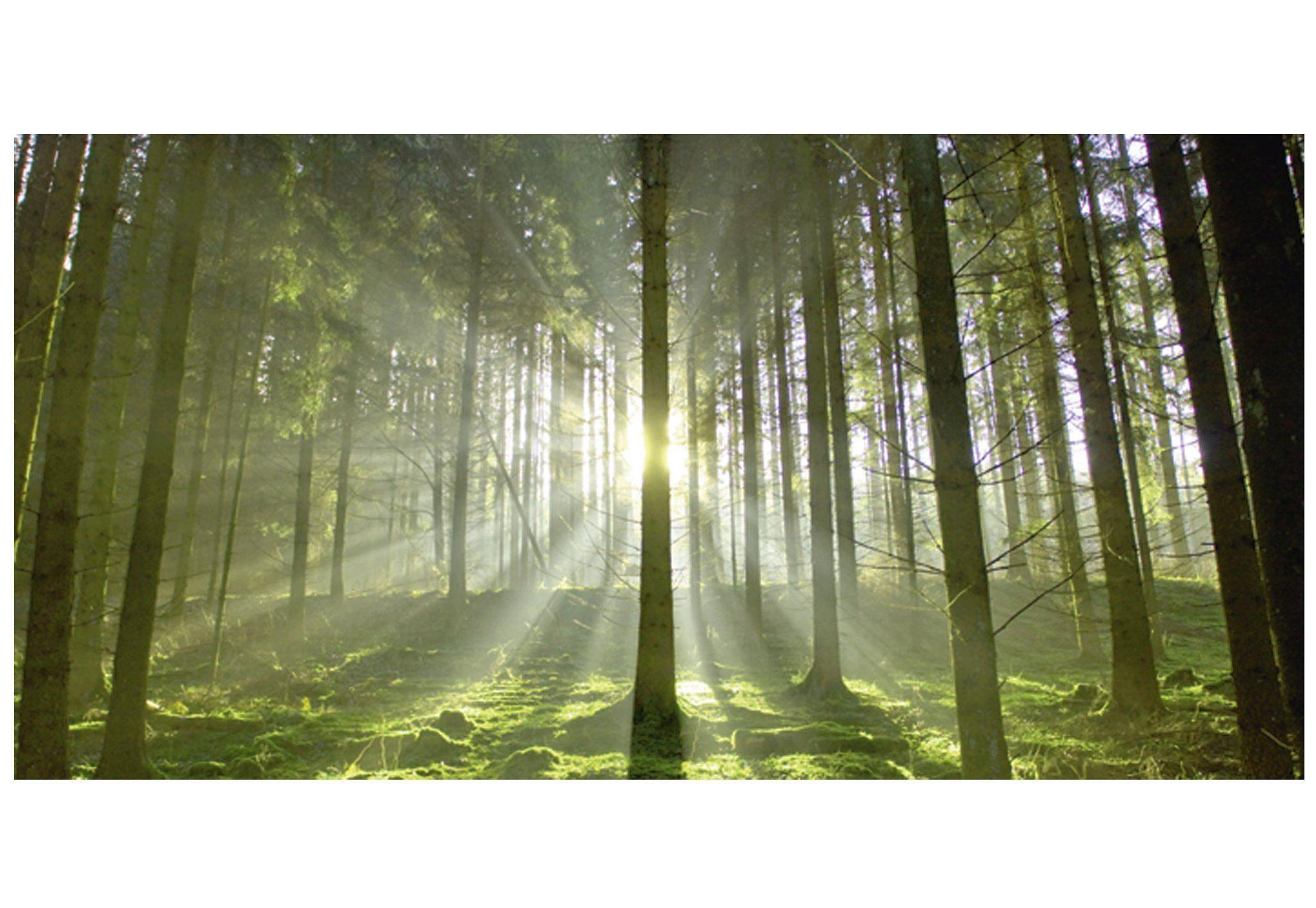 Home affaire Glasbild »Wald im Gegenlicht«
