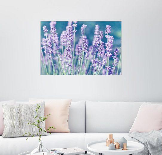 Posterlounge Wandbild, Lavendel Lila