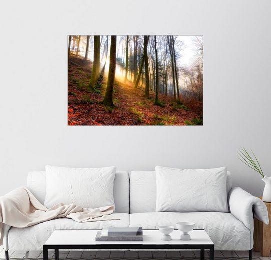 Posterlounge Wandbild, Sonnenaufgang in der Karlstalschlucht