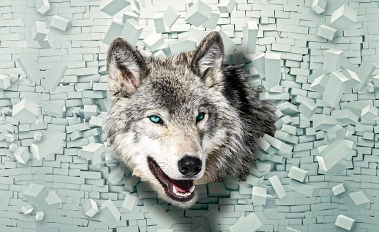 Consalnet Fototapete »Wolf kommt aus der Wand«, glatt, Motiv
