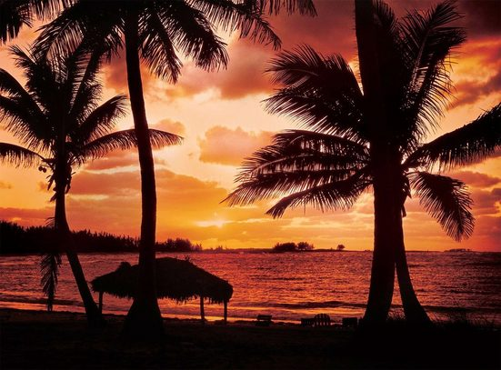 Fototapete »Palm Beach at Dusk«, glatt