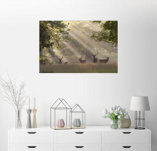 Posterlounge Wandbild, Sonnenbeschienene Hirsche