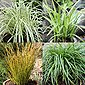 BCM Gräser »Segge brunnea 'Camara' ®« Spar-Set, Lieferhöhe: ca. 30 cm, 4 Pflanzen, Bild 5