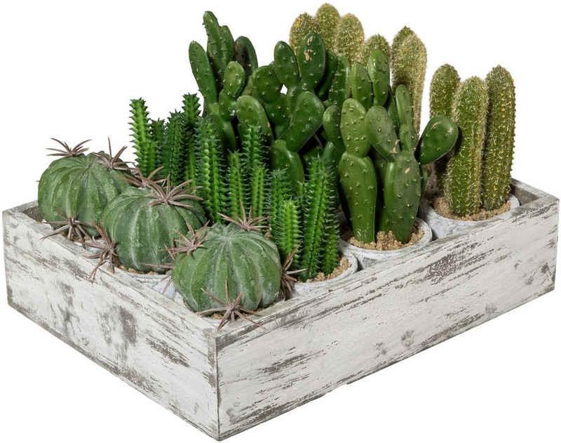 Kunstkaktus »Kaktus«, Creativ green, Höhe 12 cm, 12er Set, im Paperpot