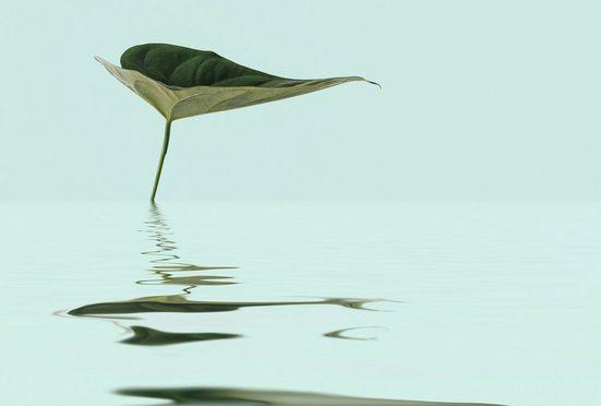 living walls Fototapete »ARTist Zen Water Leaf«, (Set, 4 St), Wasser Pflanze, Vlies, glatt
