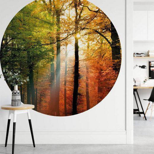 A.S. Création Fototapete, Vlies Foto Tapete Wald Golden Autumn DD119191 Baum Designwalls 2.0