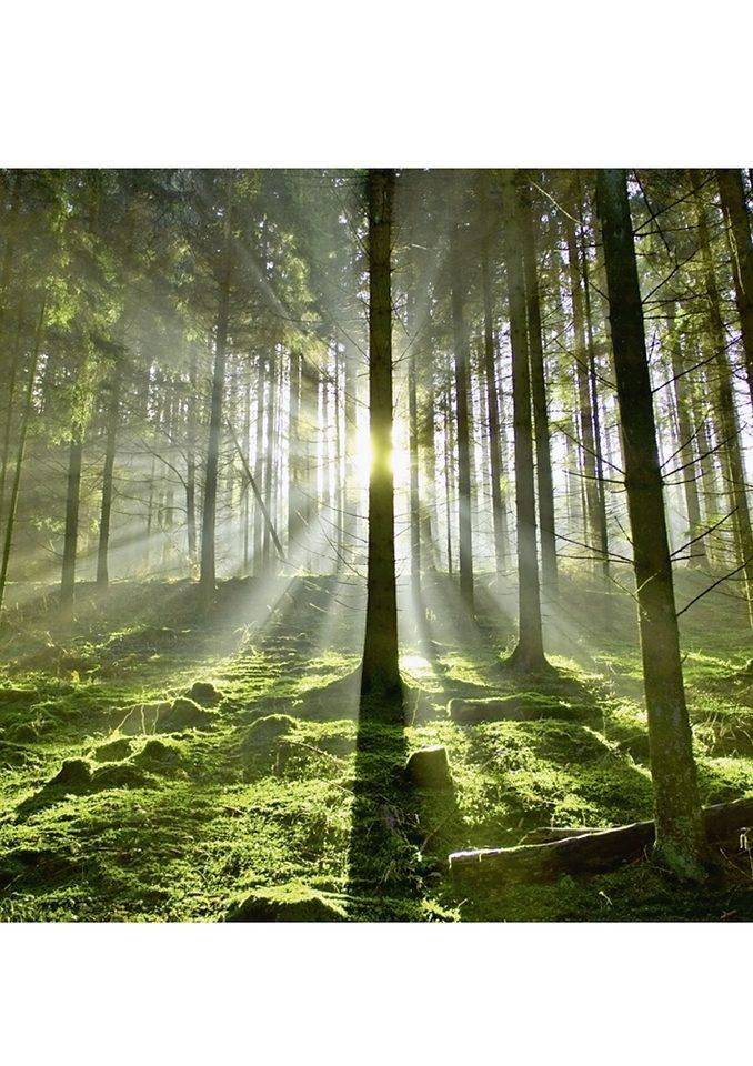 Home affaire Glasbild, »Wald im Gegenlicht«, 30/30 cm