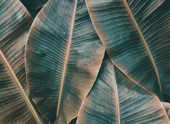 living walls Fototapete »Designwalls Banana Leaves 2«, glatt, (5 St)