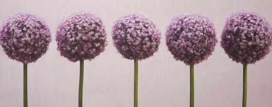 Art for the home Leinwandbild »Kugeldistel«, Blumen