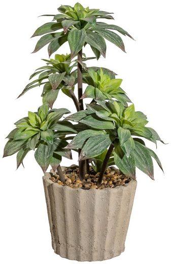 Kunstpflanze »Agave«, im Zementtopf, Höhe 60 cm