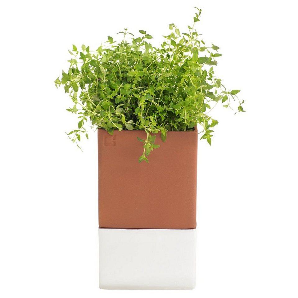 CULTDESIGN Cult Design Blumentopf selbstbewässernd EVERGREEN L in terrakotta, weiß