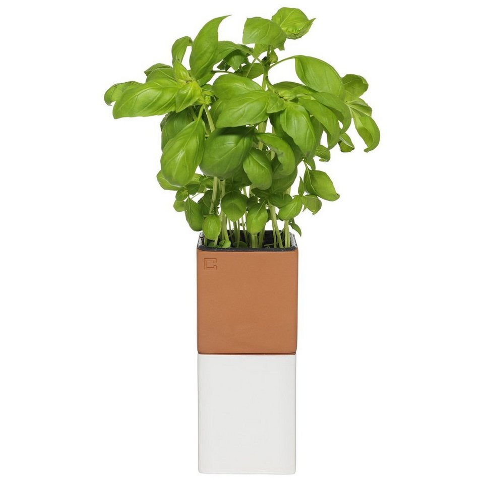 CULTDESIGN Cult Design Blumentopf selbstbewässernd EVERGREEN klein in terrakotta, weiß