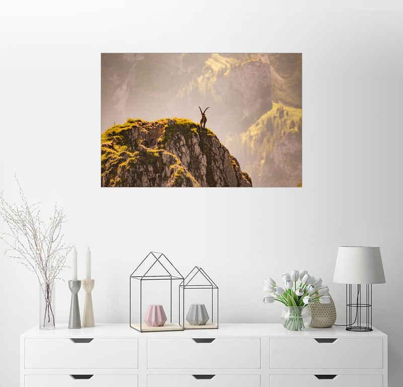 Posterlounge Wandbild, Steinbock auf Berg