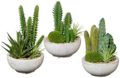 Kunstpflanze »Kakteen-Arrangement«, Creativ green, Höhe 16 cm, im Zementtopf