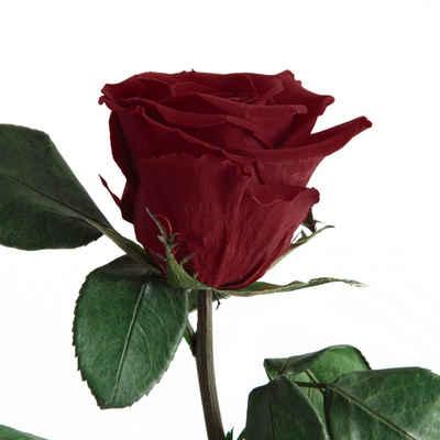 Kunstblume »Echte ewige Infinity Rose konserviert mit Stiel haltbare Rose« Rose, ROSEMARIE SCHULZ Heidelberg, Höhe 50 cm, Mit Stiel haltbar bis zu 3 Jahre