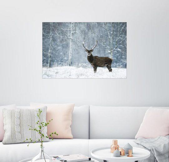 Posterlounge Wandbild, Stiller Moment im wilden Schneetreiben