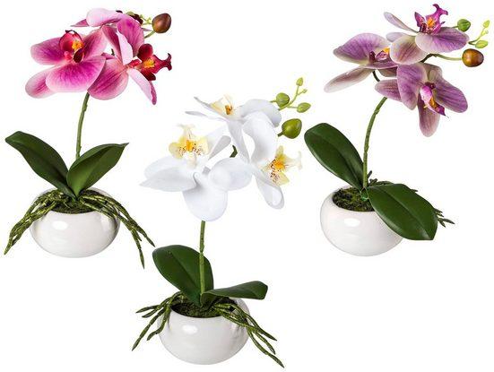 Kunstpflanze »Orchidee Phalaenopsis«, 3er Set im Keramiktopf, H: 27 cm
