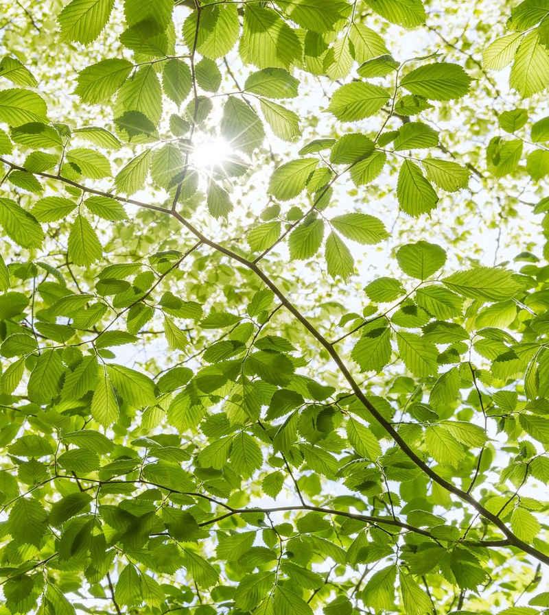 Komar Fototapete »Im Frühlingswald«, glatt, mehrfarbig, natürlich, bedruckt, (5 St)
