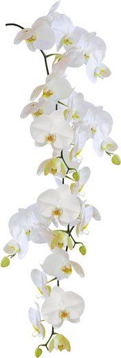 Kleine Wolke Fensterfolie »Statics Orchid«, selbsthaftend