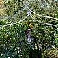 Mirabeau LED Laterne »Mirabeau LED-Laterne Hemsboro antikbraun«, Bild 3