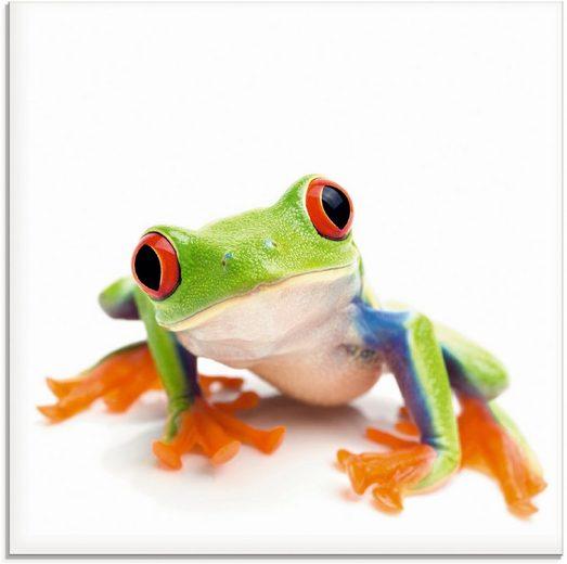 Artland Glasbild »Großaufnahme eines Frosches vor weiß«, Wassertiere (1 Stück)
