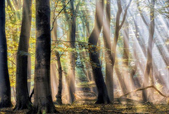 Architects Paper Fototapete »The Enchanted Forest«, (Set, 4 St), Sommer Wald, Vlies, glatt