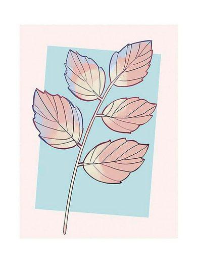 KOMAR XXL Poster »Cinderella Plant«