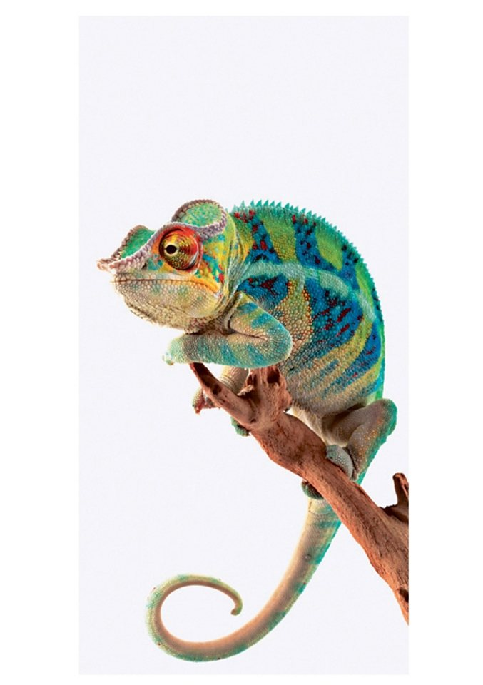 Home affaire Glasbild, »Ambanja Panther Chameleon«, 30/60 cm in weiß/bunt