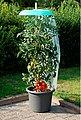 KHW Set: Pflanzenschutzdach »Tomatenhut Starter«, 3 Stk., ØxH: 49x7 cm, inkl. 3 Schläuchen + Folien, Bild 3