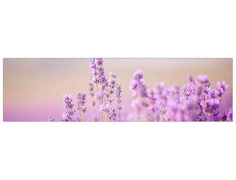 MySpotti Küchenrückwand »profix Lavendelfeld 22...