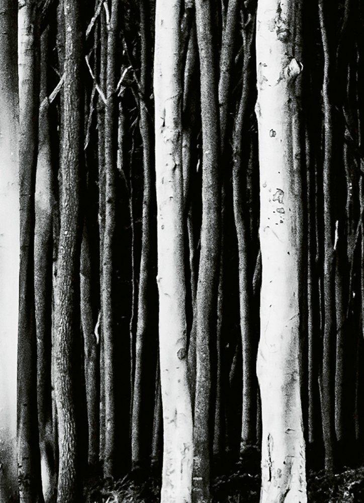 IDEALDECOR Fototapete Geisterwald, BlueBack, 2 Bahnen, 183 x 254 cm online kaufen
