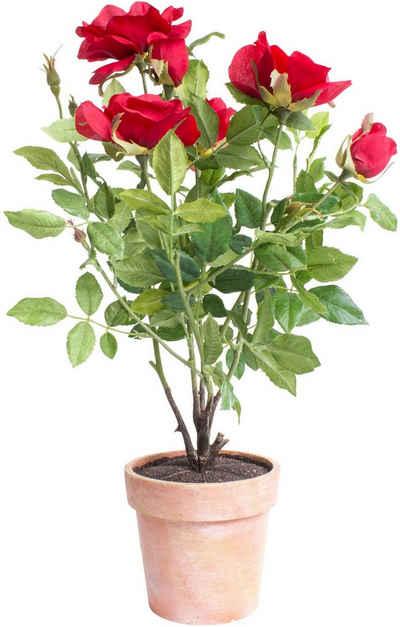 Kunstblume »Rosenstock« Rose, Botanic-Haus, Höhe 46 cm