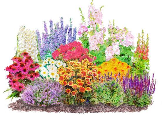 BCM Beetpflanze »Landhausgarten« Set, 12 Pflanzen