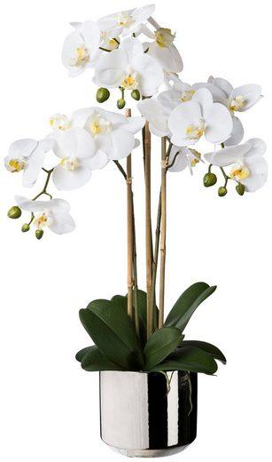 Kunstpflanze »Orchidee Phalaenopsis«, im Keramiktopf, H: 65 cm