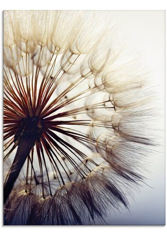 Artland Stiklinis paveikslas »Große Pusteblume...