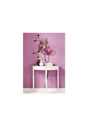 Komar Wandtattoo »Orchidee« selbstklebend