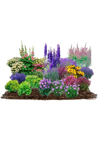 BCM Beetpflanze »Cottage Garden« rinkinys ...