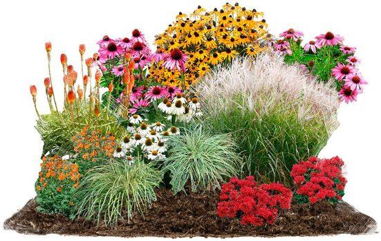 BCM Beetpflanze »Sommerliebe« Set, 12 Pflanzen