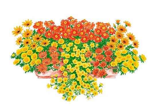 BCM Beetpflanze »Sonnige Farben« Set, 9 Pflanzen