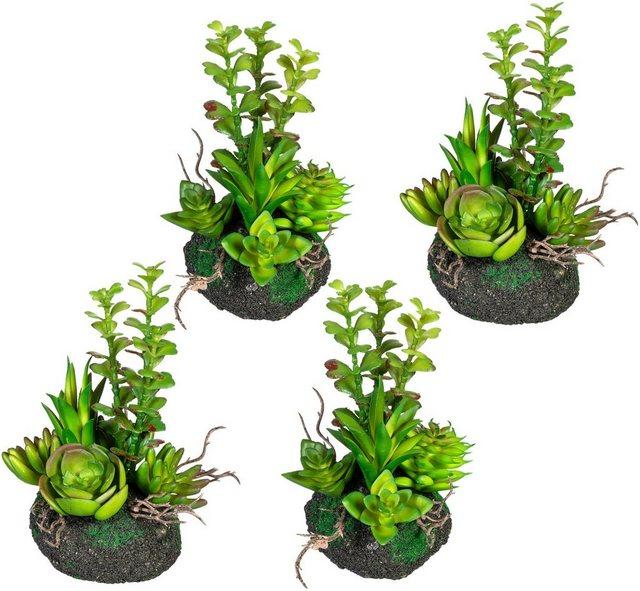 Künstliche Zimmerpflanze »Sukkulentenarrangement« Sukkulente| Creativ green| Höhe 16 cm| 4er Set | Dekoration > Dekopflanzen > Pflanzen | Creativ green