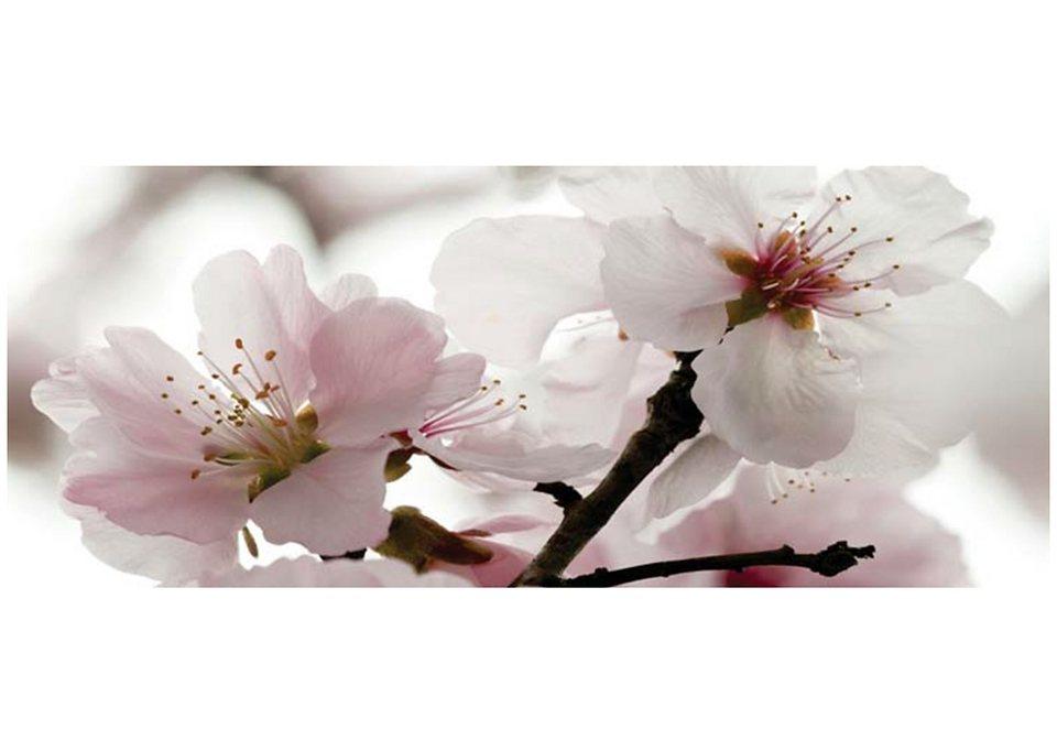 Home affaire Wandbild »Apfelblüten«, Größe: 125 x 49 cm in weiß
