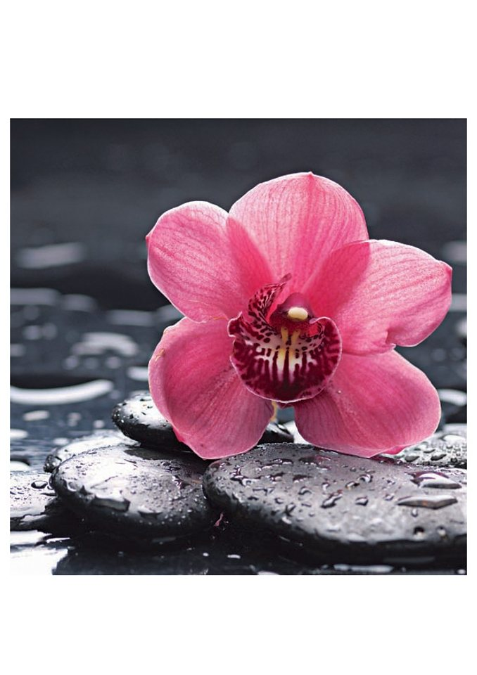 Home affaire Glasbild »Still life with pepple and macro of orchid with water drops« in rosa