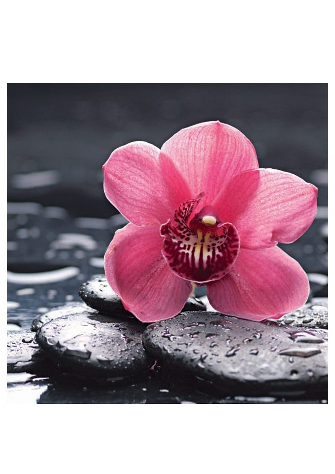 Home affaire Glasbild »Still life with pepple and macro of orchid with water drops«