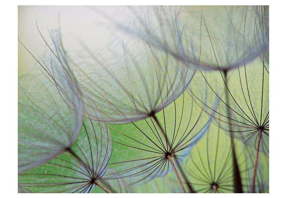 Home affaire Glasbild »Dandelion Seed«, Größe: 80/60 cm in grün