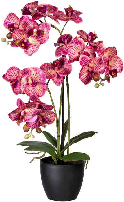 Kunstorchidee »Phalaenopsis« Orchidee Phalaenopsis, Creativ green, Höhe 65 cm
