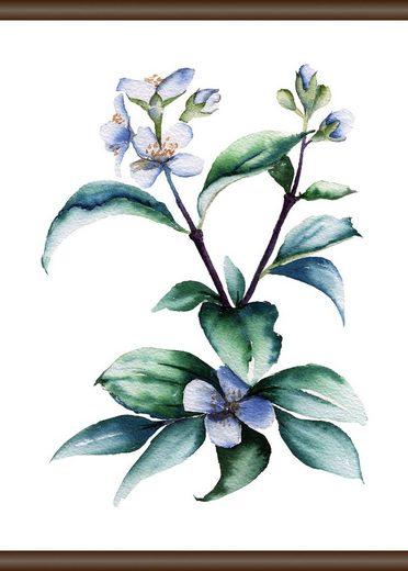 QUEENCE Leinwand »Lila Pflanze«, Leinwand Rollbild 50x70 cm