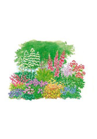BCM Beetpflanze »Schattenpflanzen« rinkiny...