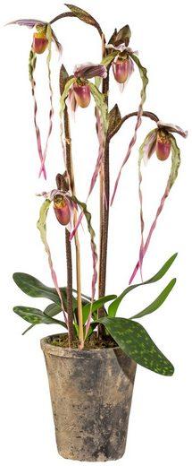 Kunstpflanze »Orchidee Frauenschuh«, im Zementtopf, Höhe 70 cm, lila